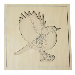Puzzle de l'oiseau avec squelette