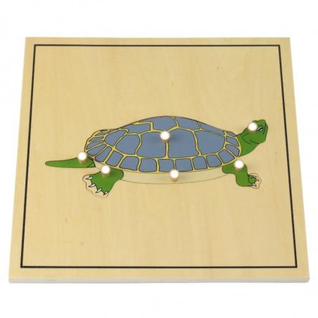 Puzzle de la tortue avec squelette