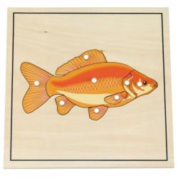Puzzle du poisson avec squelette