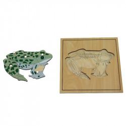 Puzzle de la grenouille avec squelette