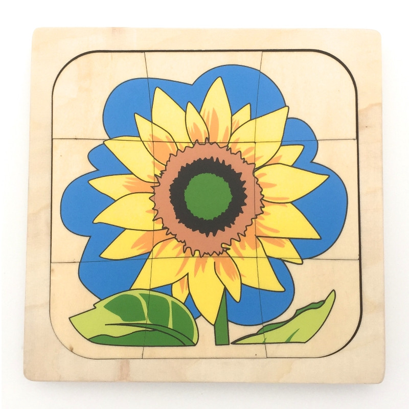Puzzle cycle de vie du tournesol 1