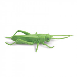 Tube - Insectes