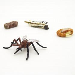 Cycle de vie du moustique