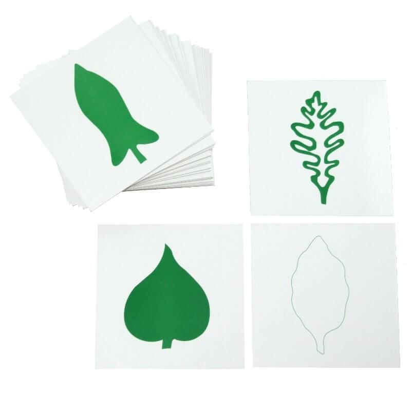 Cartes pour le cabinet de botanique Montessori